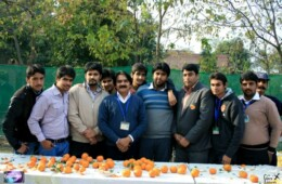 FSA organizes Orange Party