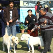 EWC holds a successful edition of Pet Show