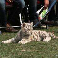 Pet Show 2012 by EWC