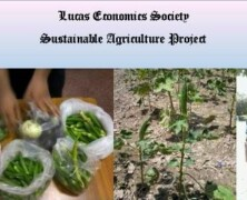 Lucas Economics Society distributes vegetables for Sustainable Agriculture Project